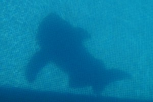 Swimming Pool Shark Shadow Photo Series Kristian Laban