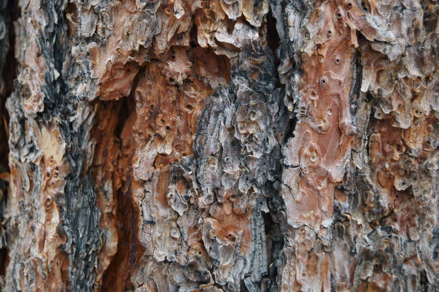 Scrapbook Wood #2 Kristian Laban