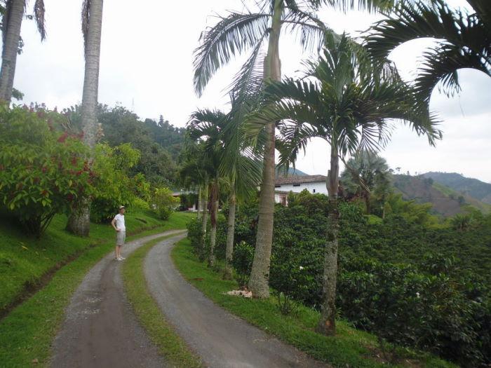 Colombia Hacienda Venecia Zona Cafetera