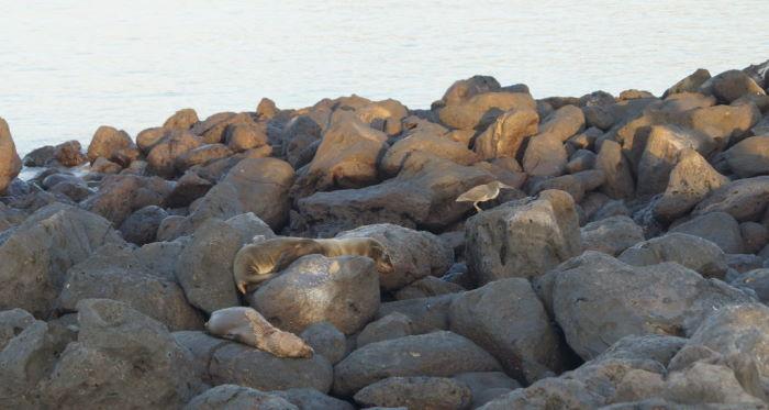 Galápagos Crucero Isla Lobos Sea Lions