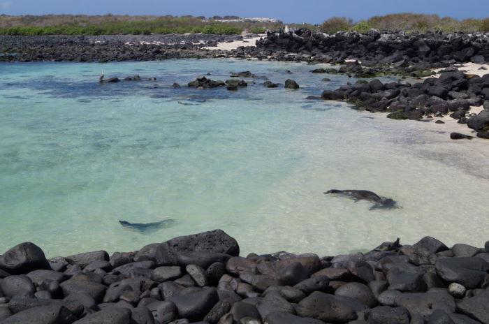 Galápagos Crucero Española Sea Lion
