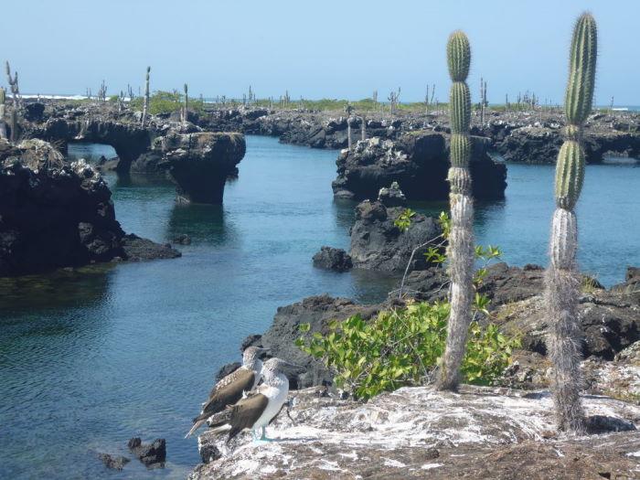 Galápagos Isla Isabela Los Tuneles Boobies