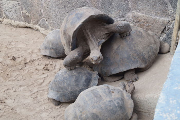Galápagos Centro de Crianza de Tortugas Gigantes