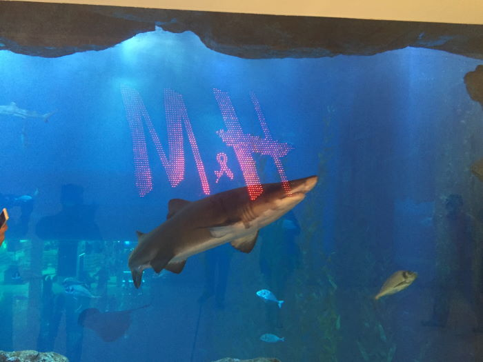 The Dubai Mall H&M Logo Aquarium Shark