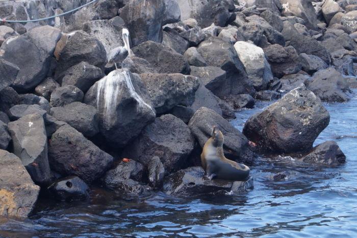 Galápagos Crucero Puerto Baquerizo Moreno Sea Lion