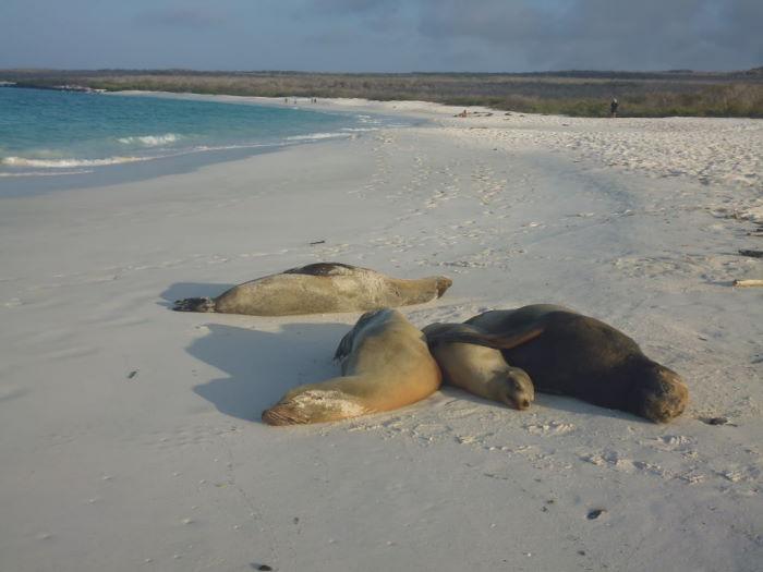 Galápagos, Crucero Española Sea Lion