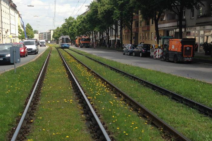 Trambahn München Blumenwiese
