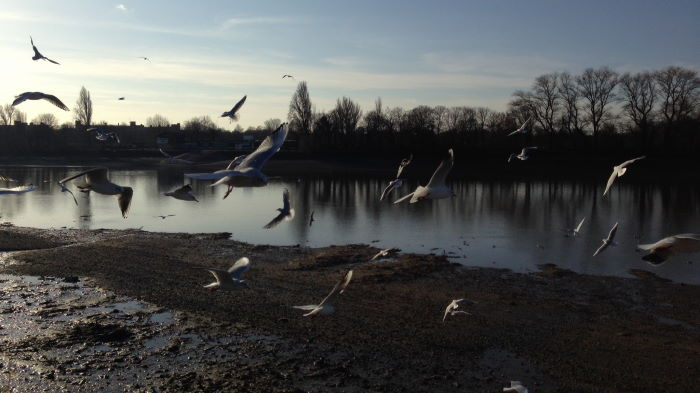 Seagulls at River Thames London Winter
