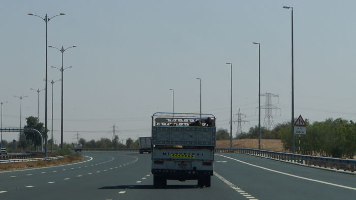 Dubai to Ibri Transport of Camels