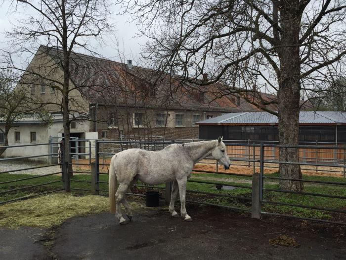 Institute und Stallungen der Tierärztlichen Fakultät auf dem Oberwiesenfeld